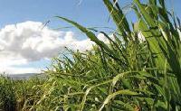 valorisation de la biomasse